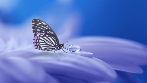Tropfen Schmetterling